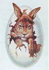 تبدیل شدن خرگوش به نام تجاری