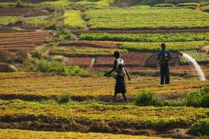 کشاورزی و حفظ محیط زیست